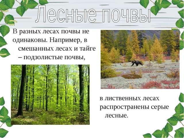 В разных лесах почвы не одинаковы. Например, в смешанных лесах и тайге – подз...