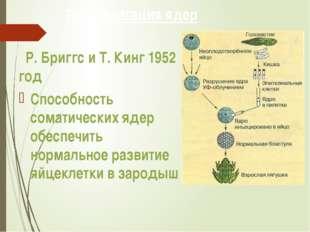 Трансплатация ядер Р. Бриггс и Т. Кинг 1952 год Способность соматических ядер