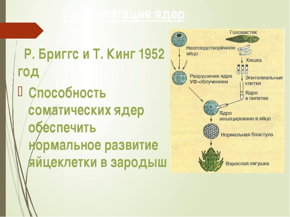Трансплатация ядер Р. Бриггс и Т. Кинг 1952 год Способность соматических ядер...