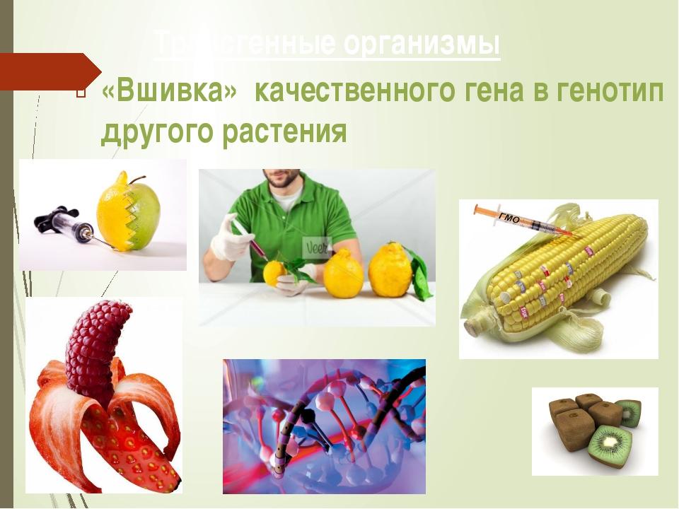Трансгенные организмы «Вшивка» качественного гена в генотип другого растения