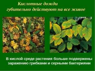 В кислой среде растения больше подвержены заражению грибками и серными бактер