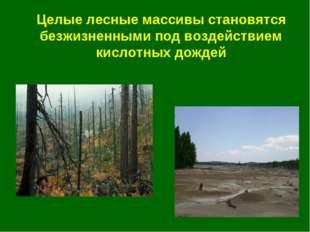 Целые лесные массивы становятся безжизненными под воздействием кислотных дождей