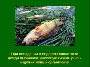 При попадании в водоемы кислотные дожди вызывают массовую гибель рыбы и други