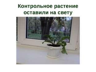 Контрольное растение оставили на свету