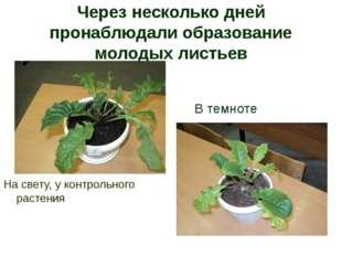 Через несколько дней пронаблюдали образование молодых листьев На свету, у кон