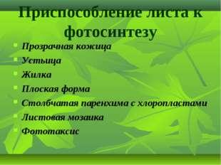 Приспособление листа к фотосинтезу Прозрачная кожица Устьица Жилка Плоская фо