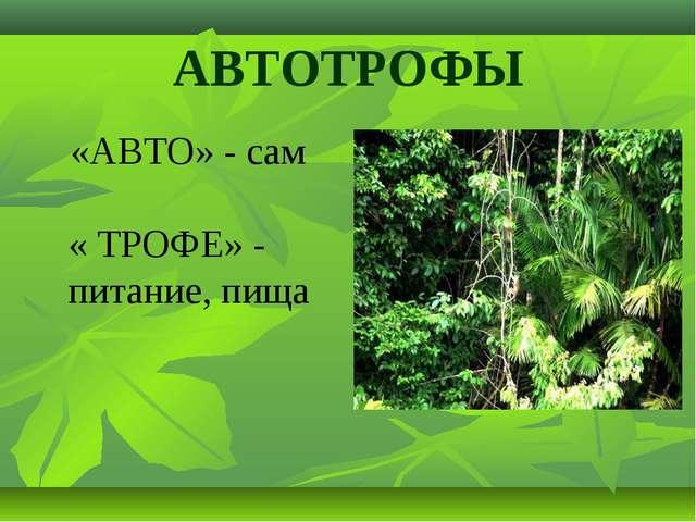 АВТОТРОФЫ «АВТО» - сам « ТРОФЕ» - питание, пища