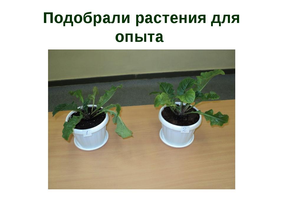 еще растения опыты картинки новые лоты