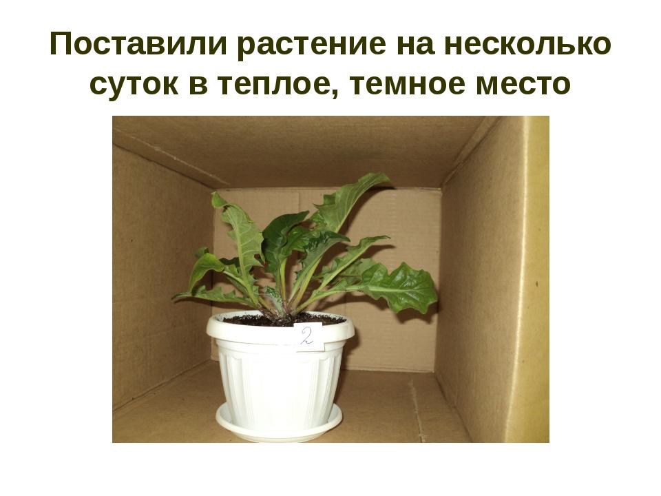 Поставили растение на несколько суток в теплое, темное место