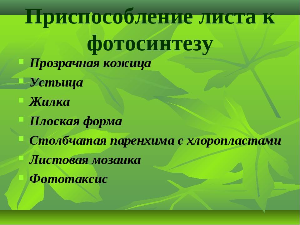 Приспособление листа к фотосинтезу Прозрачная кожица Устьица Жилка Плоская фо...