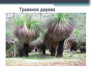Травяное дерево