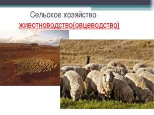 Сельское хозяйство животноводство(овцеводство)
