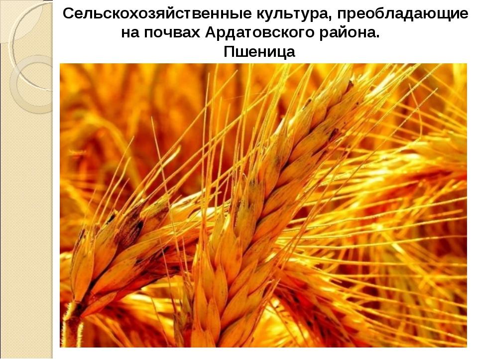 Сельскохозяйственные культура, преобладающие на почвах Ардатовского района....