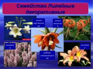 лилия тигровая лилия царственная рябчик императорский гиацинты лилейник Семей