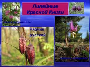 Рябчик русский Лилия кудреватая кандык сибирский Лилейные Красной Книги