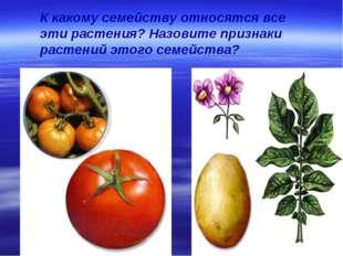 К какому семейству относятся все эти растения? Назовите признаки растений это