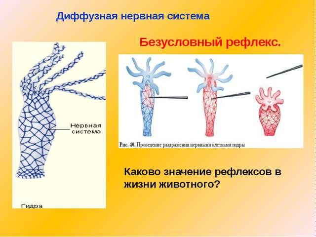 Диффузная нервная система Безусловный рефлекс. Каково значение рефлексов в жи...