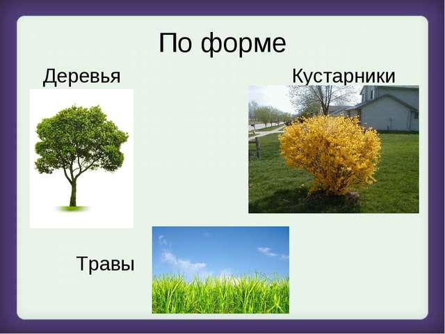 По форме Деревья Кустарники Травы