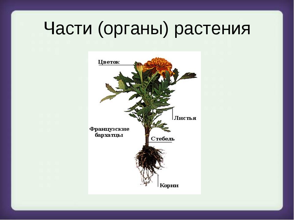 Части (органы) растения