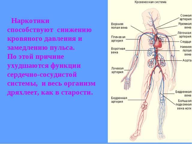 Наркотики способствуют снижению кровяного давления и замедлению пульса. По э...