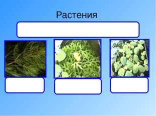 Растения уруть папоротник Писция Дают органический вещества и кислород, а пол