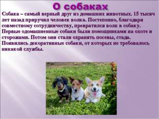 Собака – самый верный друг из домашних животных. 15 тысяч лет назад приручил