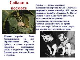 Собаки в космосе Первые корабли были беспилотными. На них отрабатывался сход