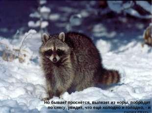Но бывает проснётся, вылезет из норы, побродит по снегу, увидит, что ещё холо