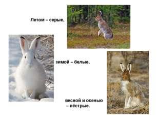 Летом – серые, зимой – белые, весной и осенью – пёстрые.