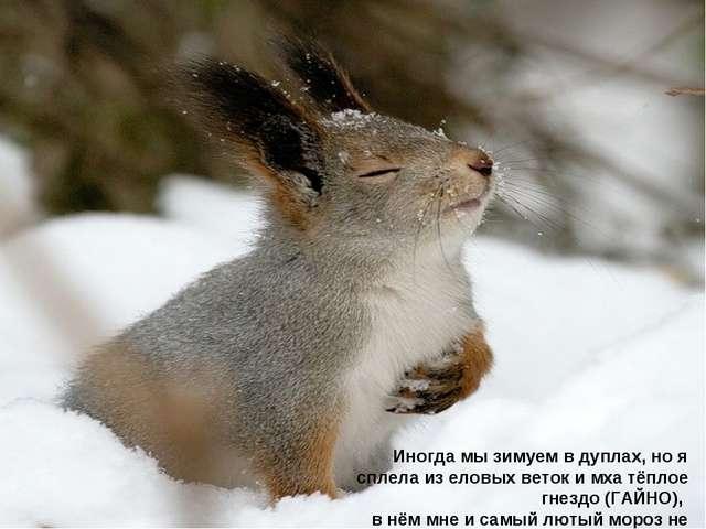 Иногда мы зимуем в дуплах, но я сплела из еловых веток и мха тёплое гнездо (Г...