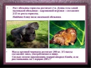 Рост обезьяны гориллы достигает 2 м. Длина тела самой маленькой обезьянки – к
