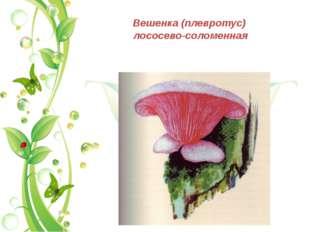 Вешенка (плевротус) лососево-соломенная