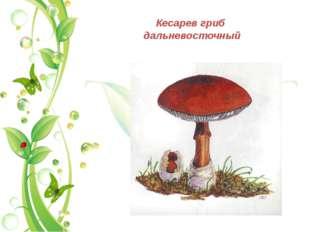 Кесарев гриб дальневосточный