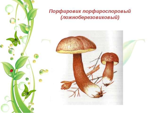 Порфировик порфироспоровый (ложноберезовиковый)