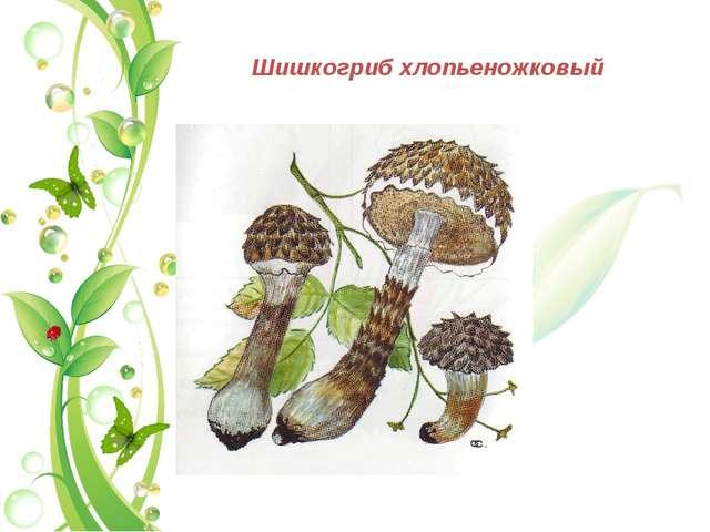 Шишкогриб хлопьеножковый