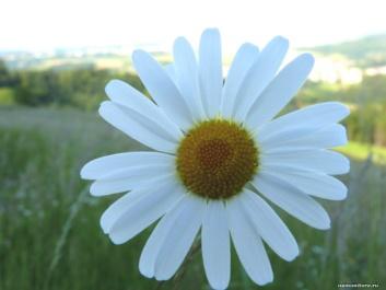 http://namonitore.ru/uploads/catalog/flowers/svetliy_tsvetok_1024.jpg