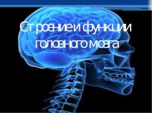 Строение и функции головного мозга