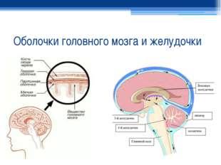 Оболочки головного мозга и желудочки