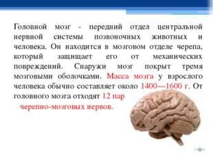 Головной мозг - передний отдел центральной нервной системы позвоночных животн