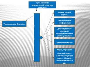 Уроки химии и биологии Элективные курсы Кружок «Юный эколог» Акции, опреации: