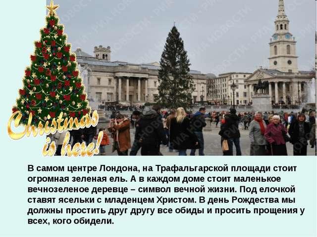 В самом центре Лондона, на Трафальгарской площади стоит огромная зеленая ель....