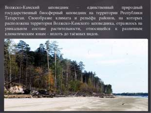 Волжско-Камский заповедник – единственный природный государственный биосферны
