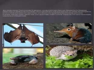 фауна заповедника насчитывает 55 видов млекопитающих. На территории всего за