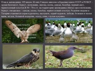 Птиц в заповеднике 195 видов. Из них 9 видов занесено в Красные книги СССР и