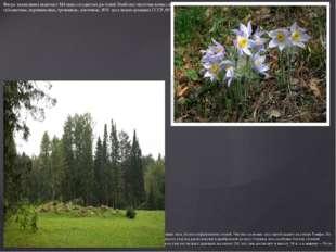 Флора заповедника включает 844 вида сосудистых растений. Наиболее многочислен