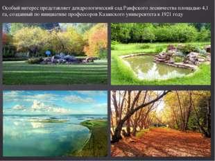 Особый интерес представляет дендрологический сад Раифского лесничества площад