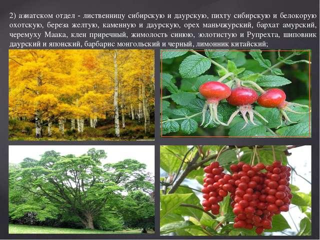 2) азиатском отдел - лиственницу сибирскую и даурскую, пихту сибирскую и бело...