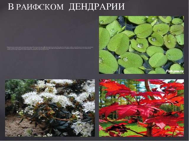Раифский участок характеризуется разнообразными видами болотной растительност...