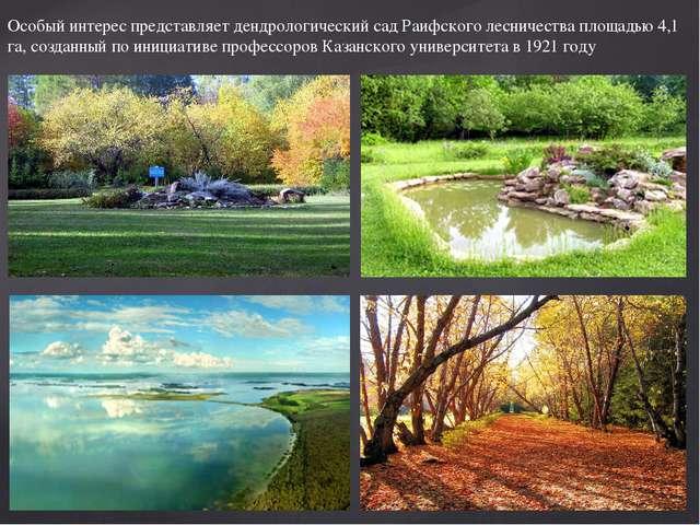 Особый интерес представляет дендрологический сад Раифского лесничества площад...