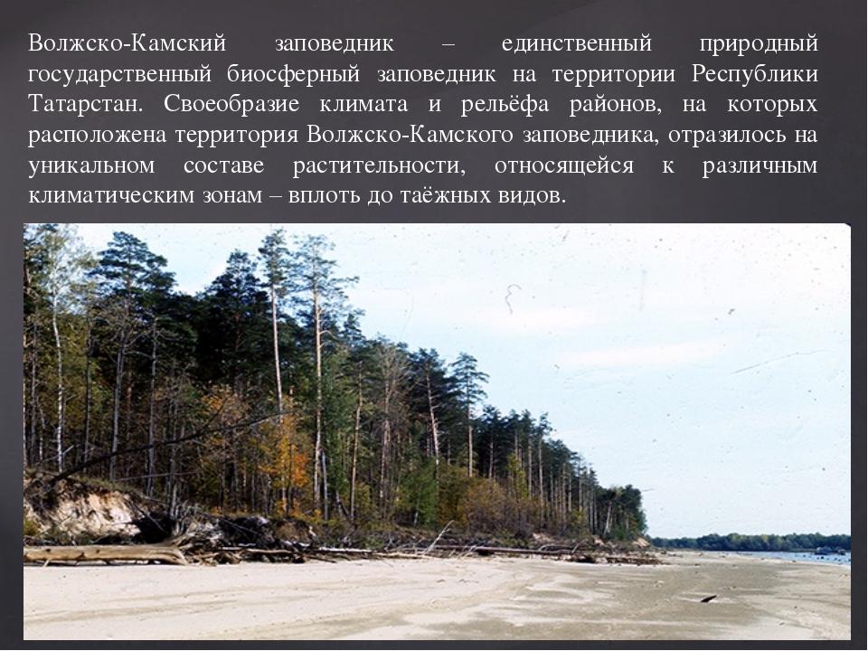 Волжско-Камский заповедник – единственный природный государственный биосферны...